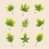 Gröna höstsidor Arkivfoto