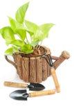 Gröna houseplants i kruka med trädgårds- hjälpmedel på vit Arkivfoto
