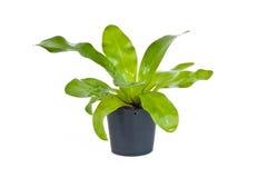 gröna houseplantskrukar Arkivbilder