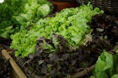 Gröna hydrokulturgrönsaker Royaltyfria Foton