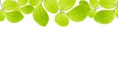 gröna isolerade leaves för ram Arkivfoton