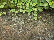 Gröna Ivy Leaves på jordningen royaltyfri fotografi