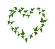 Gröna Ivy Vine i en härlig hjärta Shape Fotografering för Bildbyråer