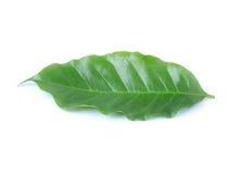 Gröna kaffesidor som isoleras på vit bakgrund royaltyfri bild