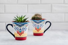 Gröna kakturs i färgrika orientaliska koppar, hem- garneringbegrepp för kaktus Royaltyfri Fotografi