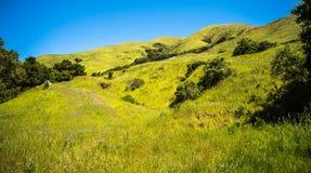 Gröna Kalifornien kullar och berg i vår Arkivbilder