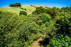 Gröna Kalifornien kullar och berg i vår Arkivbild