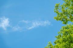 Gröna kastanjebruna sidor mot den blåa himlen royaltyfria bilder