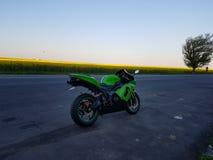 Gröna Kawa Fotografering för Bildbyråer