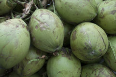 Gröna kokosnötter royaltyfria bilder