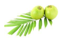 Gröna kokosnötter och blad Royaltyfri Bild