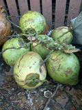 Gröna kokosnötter på lagret 2 Arkivfoto
