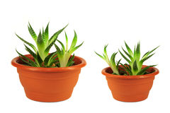 gröna krukar två för blomma Arkivbild