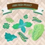 Gröna kulinariska örtkoriander, gröna ärtor, arugula och pepperm Royaltyfria Bilder