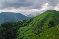 gröna kullar Arkivbilder