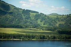 Gröna kullar av Altai Royaltyfri Fotografi