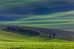 Gröna kullar av Moravia arkivfoto
