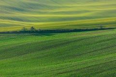 Gröna kullar av Moravia royaltyfria foton