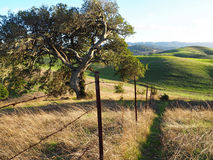 Gröna kullar av Sonoma County Arkivbild