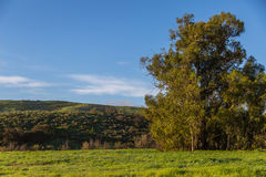 Gröna kullar efter regnet arkivfoton