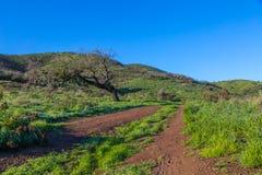 Gröna kullar efter regnet royaltyfri bild