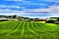 gröna kullar för bakgrund Arkivfoton