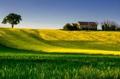 gröna kullar för fält Arkivbilder