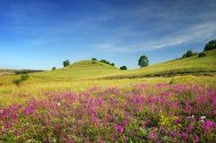 Gröna kullar för vår Natur Arkivbild