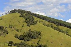 Gröna kullar med sörjer träd royaltyfri bild