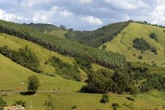 Gröna kullar med sörjer träd arkivbilder