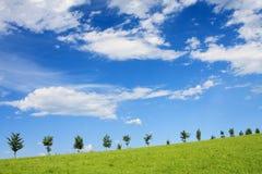 gröna kulltrees Royaltyfria Foton