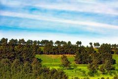 gröna kulltrees Royaltyfri Foto