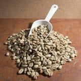 Gröna (långa) kaffebönor och skopa, Arkivbild