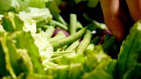 Gröna lövrika grönsaker som ätas med den nordliga chilidegen royaltyfri bild