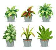 Gröna lövrika växter Arkivfoton