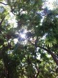 Gröna labyrint- och träsvar royaltyfri fotografi