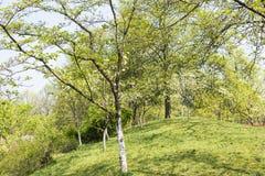 Gröna lawn och trees arkivbild