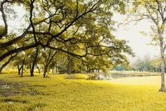 Gröna lawn och trees arkivbilder