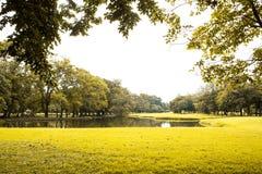 Gröna lawn och trees arkivfoto