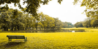 Gröna lawn och trees arkivfoton