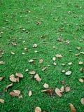 gröna lawnleaves för fall Royaltyfri Bild