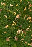 gröna lawnleaves för höst Royaltyfria Bilder
