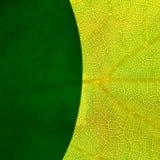gröna leafs Royaltyfri Foto
