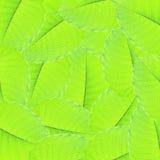 Gröna leafs för bakgrund Royaltyfri Foto