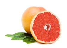 gröna leafs för grapefrukter royaltyfria bilder