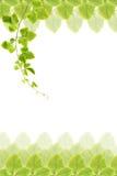 gröna leafs för ram Fotografering för Bildbyråer