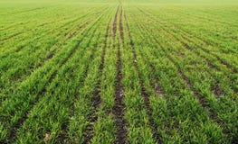 gröna linjer forar för fält Arkivbilder
