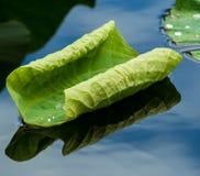 Gröna lotusblommasidor Royaltyfri Bild