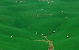 gröna lutningar arkivbild