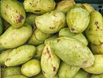 Gröna Manggo Arkivbild
